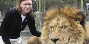 petting-a-lion1-586x293_zps82544e21